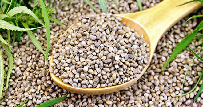eating cannabis seeds